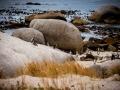 Toronto_actor_photographer_Cape Town_Boulders Beach_Cape Point_Chapman's Peak_Baboons_South Africa_Travel Photographer_Photography-11