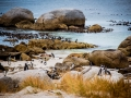 Toronto_actor_photographer_Cape Town_Boulders Beach_Cape Point_Chapman's Peak_Baboons_South Africa_Travel Photographer_Photography-12
