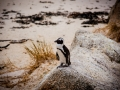 Toronto_actor_photographer_Cape Town_Boulders Beach_Cape Point_Chapman's Peak_Baboons_South Africa_Travel Photographer_Photography-15
