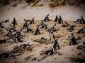 Toronto_actor_photographer_Cape Town_Boulders Beach_Cape Point_Chapman's Peak_Baboons_South Africa_Travel Photographer_Photography-16