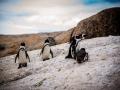 Toronto_actor_photographer_Cape Town_Boulders Beach_Cape Point_Chapman's Peak_Baboons_South Africa_Travel Photographer_Photography-3