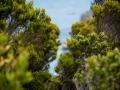 Toronto_actor_photographer_Cape Town_Boulders Beach_Cape Point_Chapman's Peak_Baboons_South Africa_Travel Photographer_Photography-38