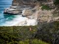 Toronto_actor_photographer_Cape Town_Boulders Beach_Cape Point_Chapman's Peak_Baboons_South Africa_Travel Photographer_Photography-39