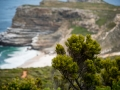 Toronto_actor_photographer_Cape Town_Boulders Beach_Cape Point_Chapman's Peak_Baboons_South Africa_Travel Photographer_Photography-41