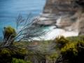 Toronto_actor_photographer_Cape Town_Boulders Beach_Cape Point_Chapman's Peak_Baboons_South Africa_Travel Photographer_Photography-43