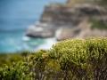 Toronto_actor_photographer_Cape Town_Boulders Beach_Cape Point_Chapman's Peak_Baboons_South Africa_Travel Photographer_Photography-44