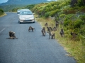 Toronto_actor_photographer_Cape Town_Boulders Beach_Cape Point_Chapman's Peak_Baboons_South Africa_Travel Photographer_Photography-48