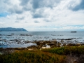Toronto_actor_photographer_Cape Town_Boulders Beach_Cape Point_Chapman's Peak_Baboons_South Africa_Travel Photographer_Photography-9