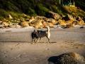 toronto_actor_cape_town_beaches_tee_schneider_photographer-32