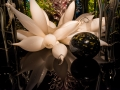 Chihuly (11)
