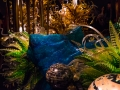 Chihuly (14)