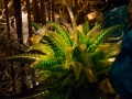 Chihuly (17)