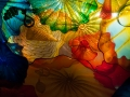 Chihuly (26)