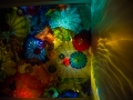 Chihuly (29)