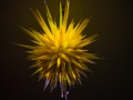 Chihuly (34)