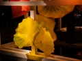 Chihuly (46)