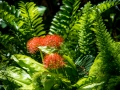 Tee_Schneider_Actor_Photographer_Toronto_Kirstenbosch_Botanical_Garden_Cape_Town-1