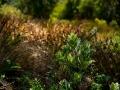 Tee_Schneider_Actor_Photographer_Toronto_Kirstenbosch_Botanical_Garden_Cape_Town-11