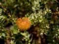 Tee_Schneider_Actor_Photographer_Toronto_Kirstenbosch_Botanical_Garden_Cape_Town-14