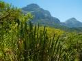 Tee_Schneider_Actor_Photographer_Toronto_Kirstenbosch_Botanical_Garden_Cape_Town-21