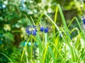 Tee_Schneider_Actor_Photographer_Toronto_Kirstenbosch_Botanical_Garden_Cape_Town-3