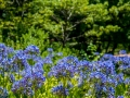 Tee_Schneider_Actor_Photographer_Toronto_Kirstenbosch_Botanical_Garden_Cape_Town-30