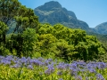 Tee_Schneider_Actor_Photographer_Toronto_Kirstenbosch_Botanical_Garden_Cape_Town-31