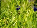 Tee_Schneider_Actor_Photographer_Toronto_Kirstenbosch_Botanical_Garden_Cape_Town-38