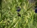 Tee_Schneider_Actor_Photographer_Toronto_Kirstenbosch_Botanical_Garden_Cape_Town-39