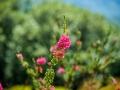 Tee_Schneider_Actor_Photographer_Toronto_Kirstenbosch_Botanical_Garden_Cape_Town-4