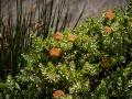 Tee_Schneider_Actor_Photographer_Toronto_Kirstenbosch_Botanical_Garden_Cape_Town-45