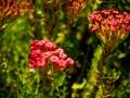 Tee_Schneider_Actor_Photographer_Toronto_Kirstenbosch_Botanical_Garden_Cape_Town-49