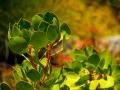Tee_Schneider_Actor_Photographer_Toronto_Kirstenbosch_Botanical_Garden_Cape_Town-50