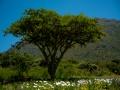 Tee_Schneider_Actor_Photographer_Toronto_Kirstenbosch_Botanical_Garden_Cape_Town-51
