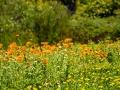 Tee_Schneider_Actor_Photographer_Toronto_Kirstenbosch_Botanical_Garden_Cape_Town-52