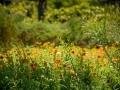 Tee_Schneider_Actor_Photographer_Toronto_Kirstenbosch_Botanical_Garden_Cape_Town-53